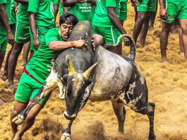 The argument that Jallikattu was a cultural event and hence could not be curtailed was not accepted by the apex court