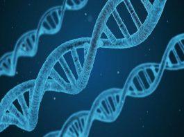 Slicing Through Gene-Splicing