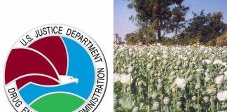 (L-R) seal of DEA; A poppy field (Deeptrivia/Wikipedia)