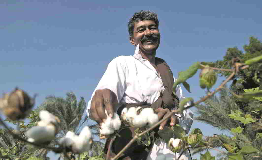 Andhra Pradesh, Gujarat and Maharashtra were at the forefront in introducing Bt Cotton variants. Photo: geneticliteracyproject.org