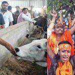 (L-R) Uttar Pradesh Chief Minister Yogi Adityanath feeds cows; VHP activists in a buoyant and strident mood in Kolkata. Photos: UNI