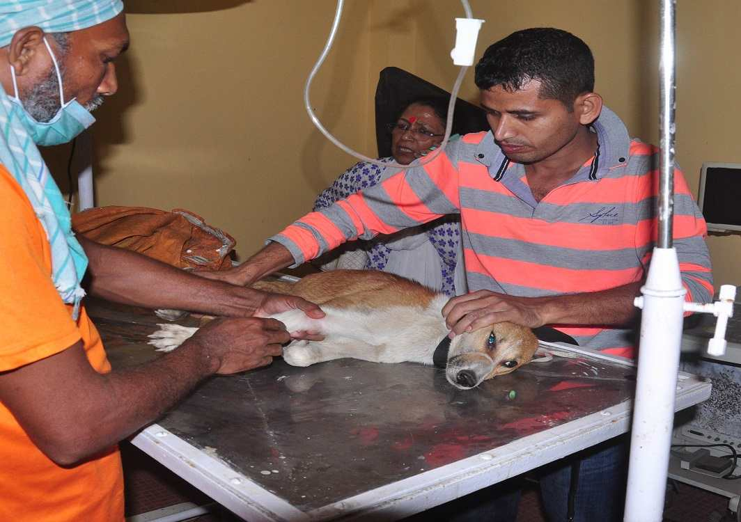 Members of People for Animals give treatment to an injured dog at the PFA Hospital and Shelter Centre in Guwahati. Photo: UNI