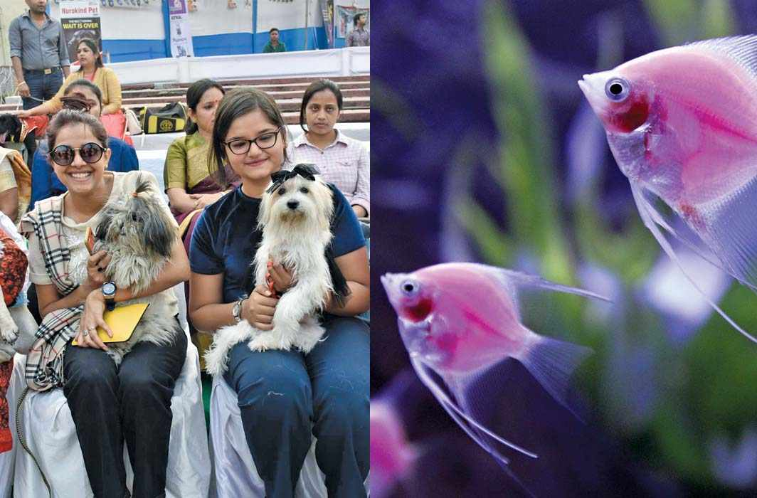 Dog breeders as well as fish aquarium owners will soon have to do a lot of paperwork to continue having these pets. Photo: UNI