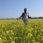 GM mustard: SC asks govt to have scientists file report on possible impact