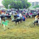 The new regulations are needless for open cattle markets like the one in Laxmi Nagar in Mathura and create problems for the traders. Photo: Vivian Fernandes