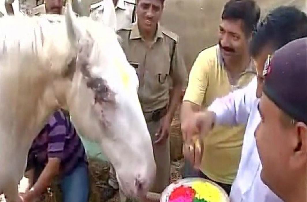 A YouTube greb showing horse Shaktiman (file picture)