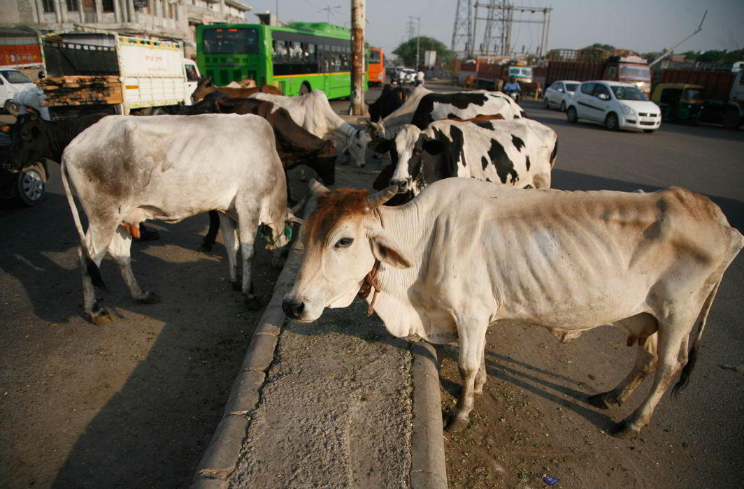 Govt to roll back move to ban sale of cattle for slaughter