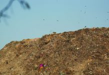 Garbage piled up at Okhla landfill in Delhi. Photo: Anil Shakya