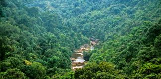 Dense forests in Meghalaya (representative image). Photo Courtesy Wikimedia