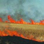 Centre submits high-level task committee report on stubble burning