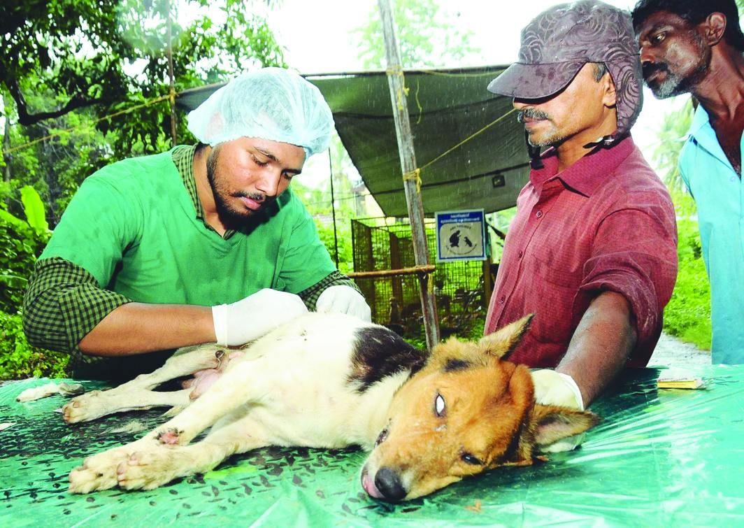 Strays are sterilised as part of the animal birth control programme in Kozhikode