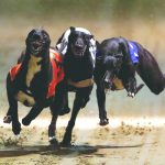 Greyhound Dog Races: Matter reaches Punjab and Haryana High Court