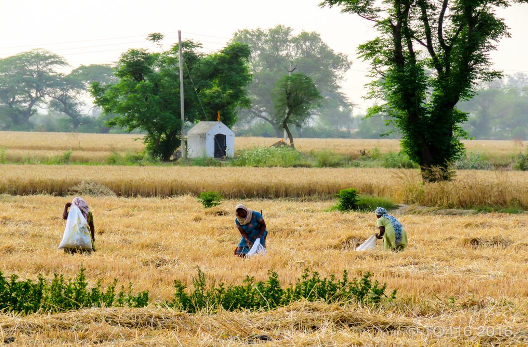 Another disaster in the making: Lease out your farm land and be trapped in 18% GST net from June 1
