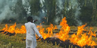 Farmers burn the stubble after harvesting/Photo Courtesy: Greenpeace