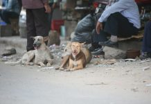 Over 150 community dogs in Sitapur were killed under official orders after a spurt in canine attacks in the district