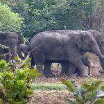 Elephant Corridors: Saving the Jumbo