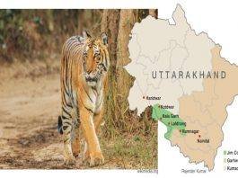 Corbett National Park: A Wild Ride