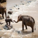 SC tells states to desist from the use of fireballs, spikes for driving elephants