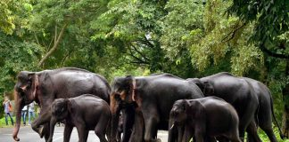 A herd of elephants crossing a road that cuts through a national park/Photo: UNI