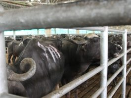 The PIL contended that meat export is anti-social, barbaric and unconstitutional/Photo: Vivian Fernandes