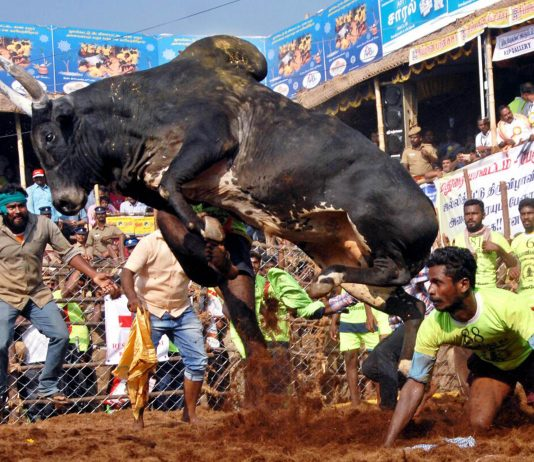 In Defence of Animal Rights
