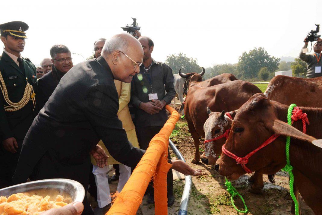 President Ram Nath Kovind feeding cows at Deendayal Research Institute in Arogyadham, in Chitrakoot, MP/Photo: UNI