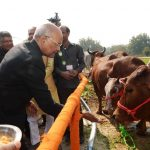President Ram Nath Kovind feeding cows at Deendayal Research Institute in Arogyadham, in Chitrakoot, MP/Photo: UNI