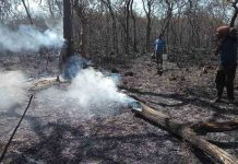 Forest officials try to douse the raging fire/Photo: twitter.com/hashtag/bandipur
