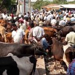 Gujarat HC Blocks State Govt's Bid to Play Appeasement Politics by Banning Livestock Export