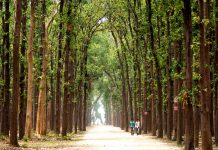 The NGT found that forest land in Gorakhpur was handed over to builders by the GDA/Photo: gorakhpur.finalreport.in