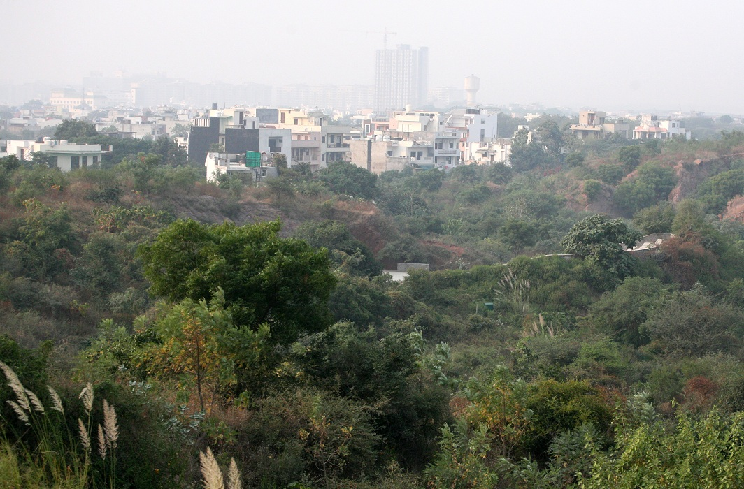 The Aravali hills in Gurugram/Photo: Anil Shakya