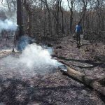 Forest officials dousing fire in a forest (representative image)
