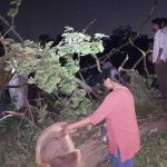 Supreme Court Orders No More Trees Be Cut At Aarey, Maintain Status Quo Till Next Hearing On Oct 21