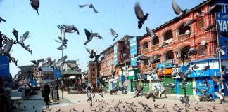 SILENCE THEY SAID: Pigeons flock Lal Chowk, the main business hub in Srinagar, where shops and business establishments are closed as separatist organizations have called for a general strike in the Kashmir valley to protest against the death of civilians in yesterday's Kulgam encounter between militants and security forces, UNI