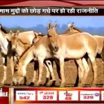 Proud to take inspiration from Donkey: PM Modi