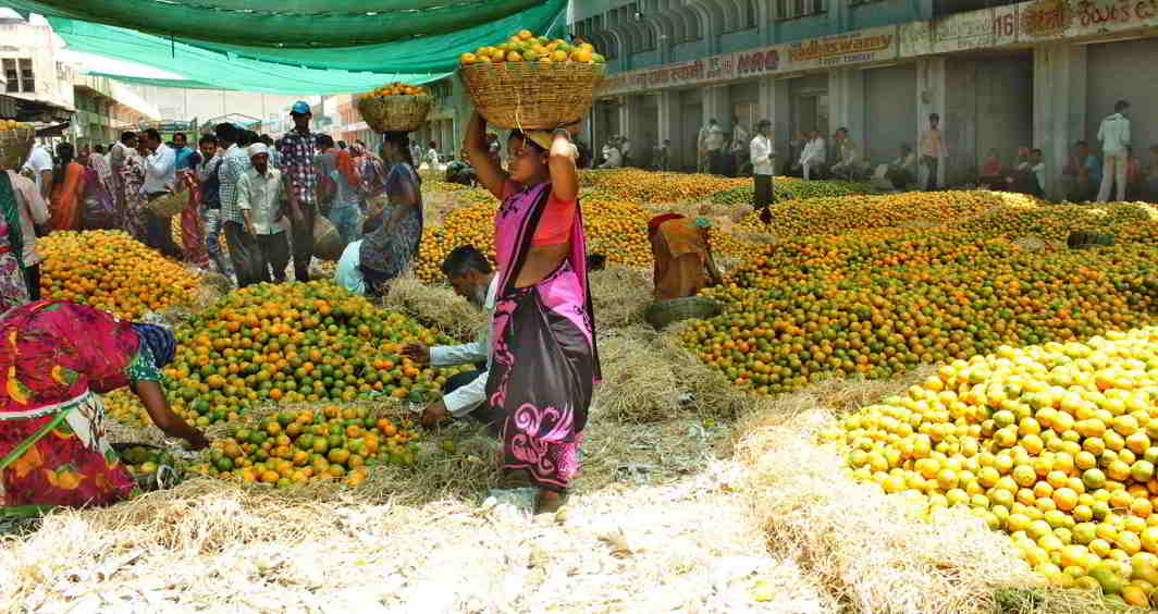LAST BLUSHES: Oranges flood the Kalamna fruit market in Nagpur, UNI