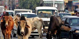 Cows happy, people aren't