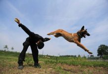 GO REX: A policeman trains a police dog in Xi'an, Shaanxi province, China, Reuters/UNI