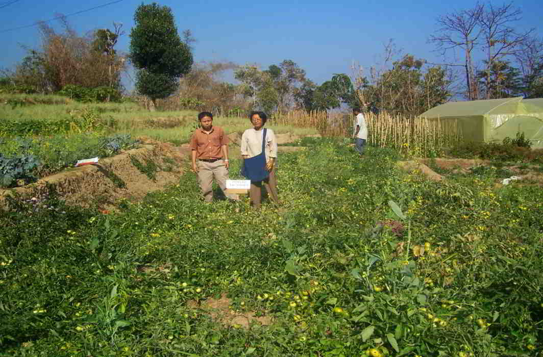 Climate change blues: 'everyday monsoon' foxes Mizo farmers
