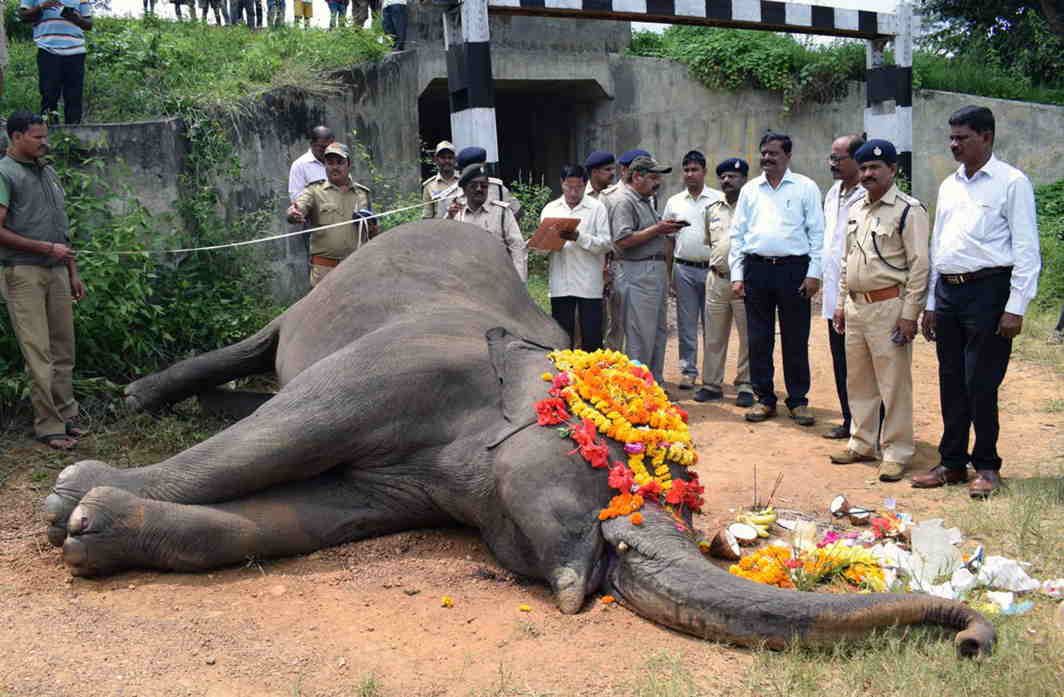 SHRINKING SPACES: Forest and police officials perform rituals before cremation of a 20-year-old female wild elephant which died after a train hit her on a railway bridge between Tavaragatti and Bismanatti villages in Golihalli forest range in Belagavi district of Karnataka, UNI