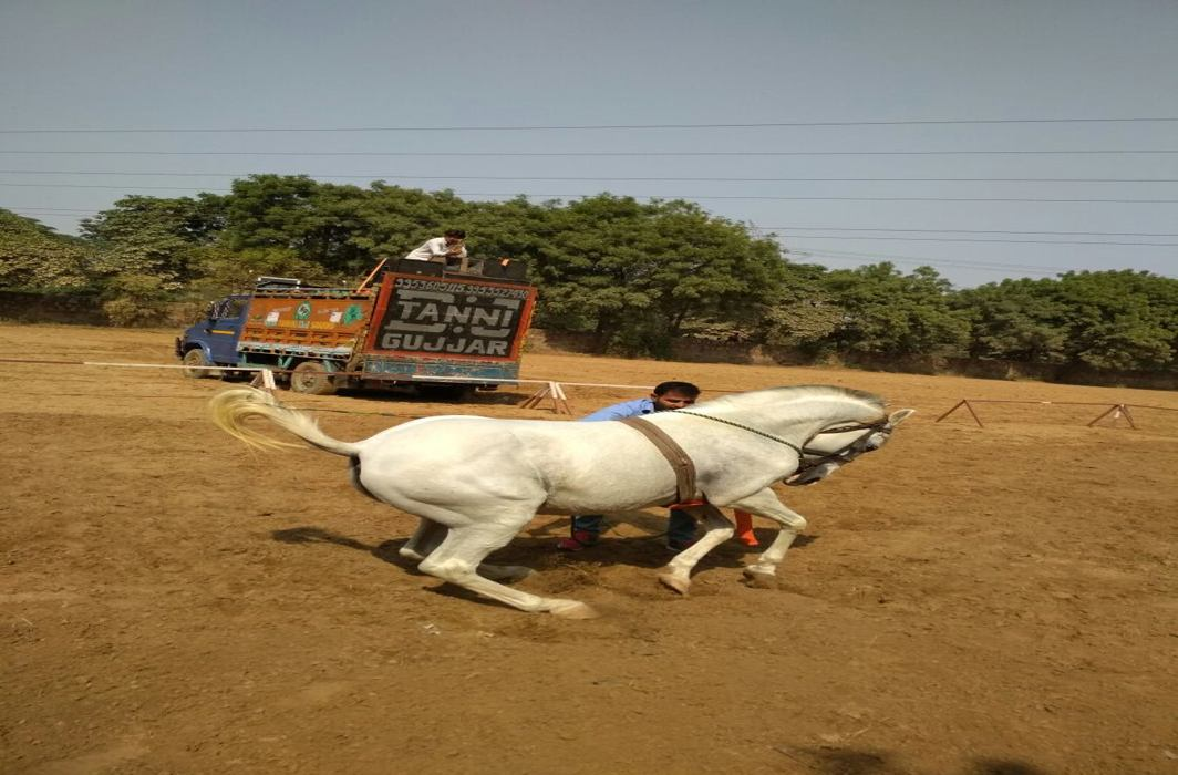 All the Pretty Marwari Horses: Dance, rawal and flat races draw footfall