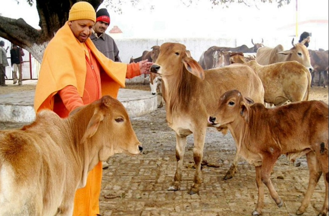 Yogi's formula for job creation – Gaushalas in UP districts