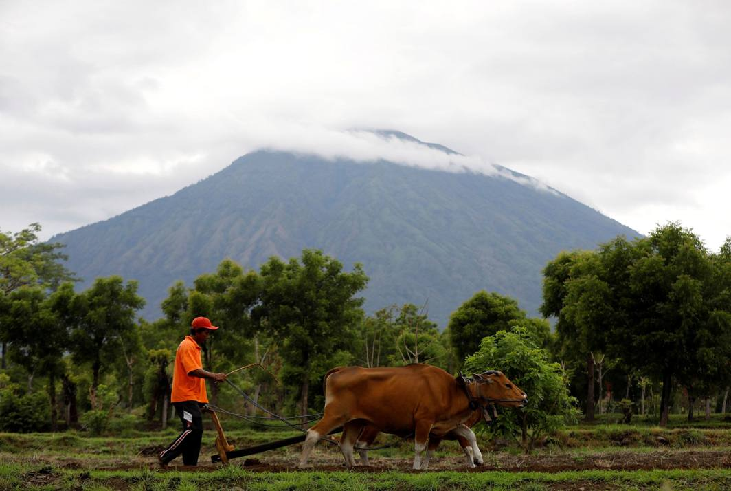 THE HILLS HAVE EYES: Mount Agung volcano, with the peak covered in clouds, is seen in the background as a farmer ploughs his field near Kubu, Karangasem Regency, Bali, Indonesia, Reuters/UNI