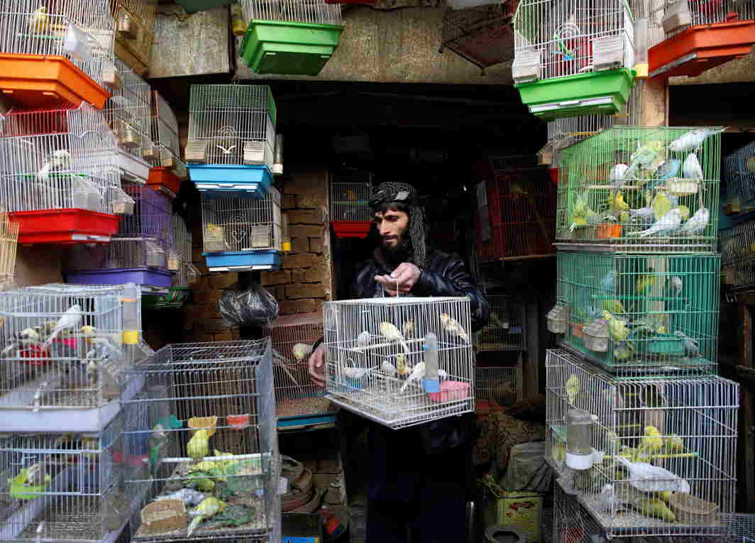 CAGED BEAUTIES: An Afghan man arranges canary cages in his shop at a bird market in Kabul, Afghanistan, Reuters/UNI