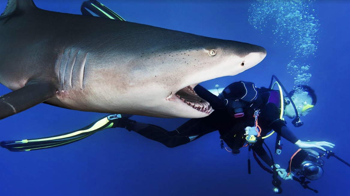 New york based india origin woman equity director killed by shark publicscrutiny Gallery