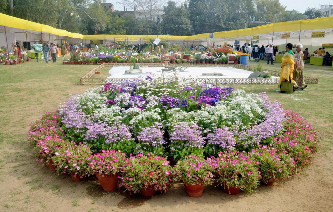 WALK IN THE PARK: A variety of blooms during a two-day fruit, vegetable and flower show organised by the All India Kitchen Garden Association (AIKGA), in New Delhi, UNI