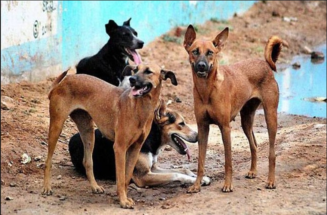 Dogs maul 3 children to death