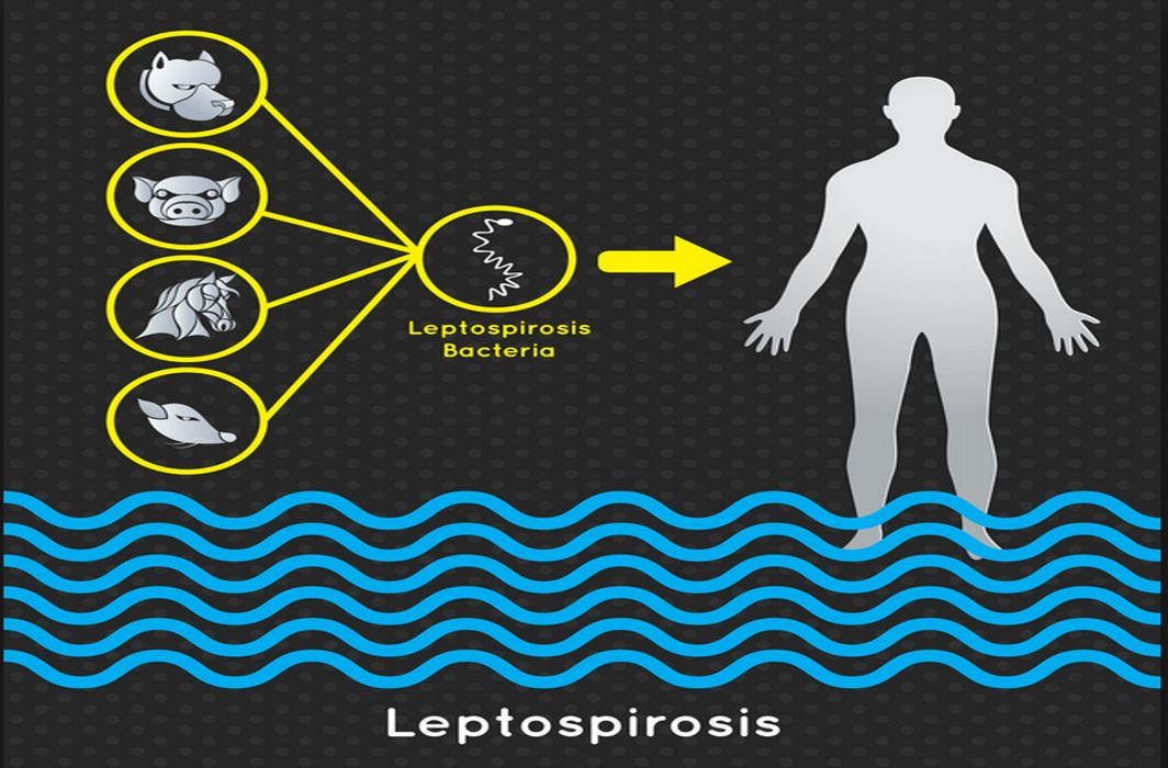 Scientists a step closer to potential vaccine against Leptospirosis