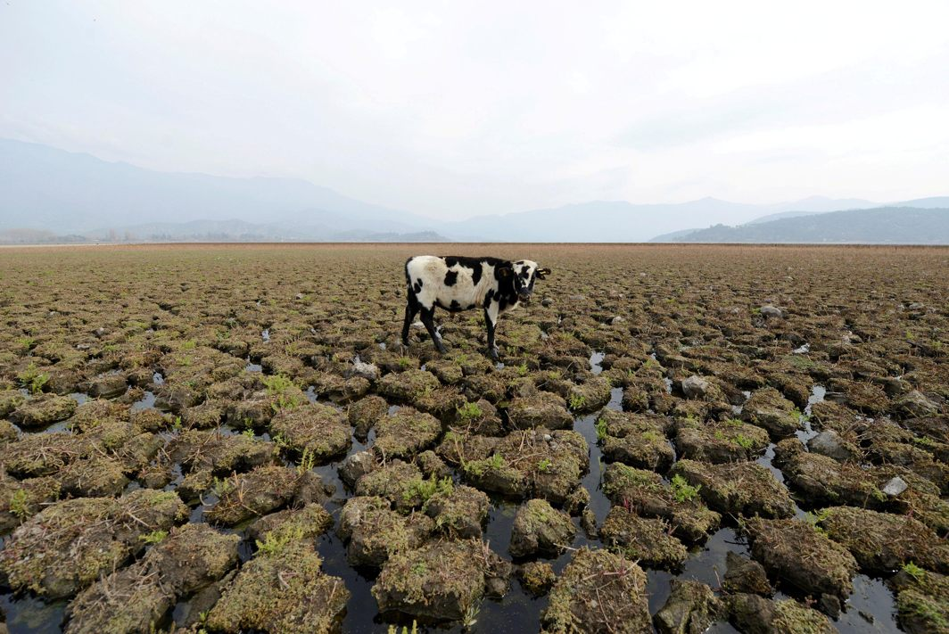 A cow is seen on land that used to be filled with water, at the Aculeo Lagoon in Paine, Chile, Reuters/UNI