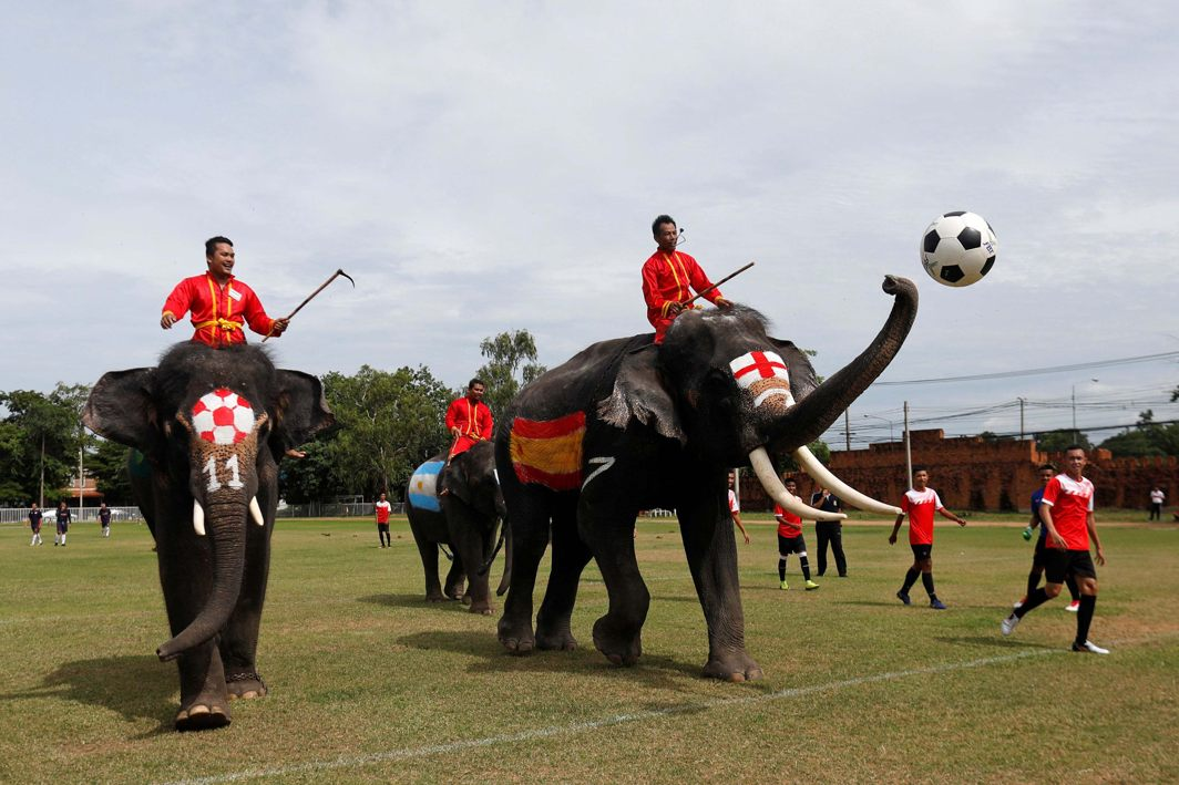 Elephants play soccer during an anti-gambling campaign for school children in Ayutthaya, Thailand, Reuters/UNI